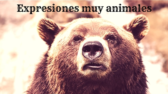 Modismos sobre animales en español